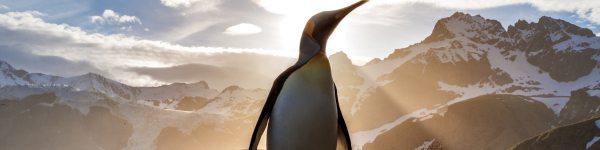 Installer Linux, c'est facile. Voici maintenant une formation pour s'en servir correctement – Tech – Numerama